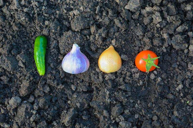 Nya grönsaker i trädgården på jorden royaltyfri fotografi