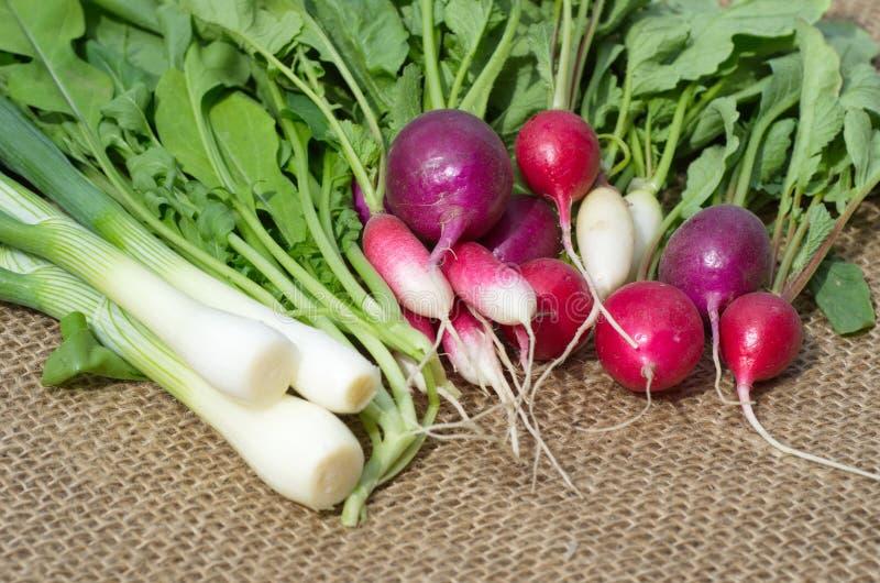 Nya grönsaker - rädisa, arugula och salladslök på säckväv royaltyfria foton