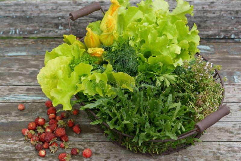 Nya grönsallatsidor som rivas sönder från trädgården Saftig grön sallad Sommar Blommor av zucchinin, arugula och timjan royaltyfri bild