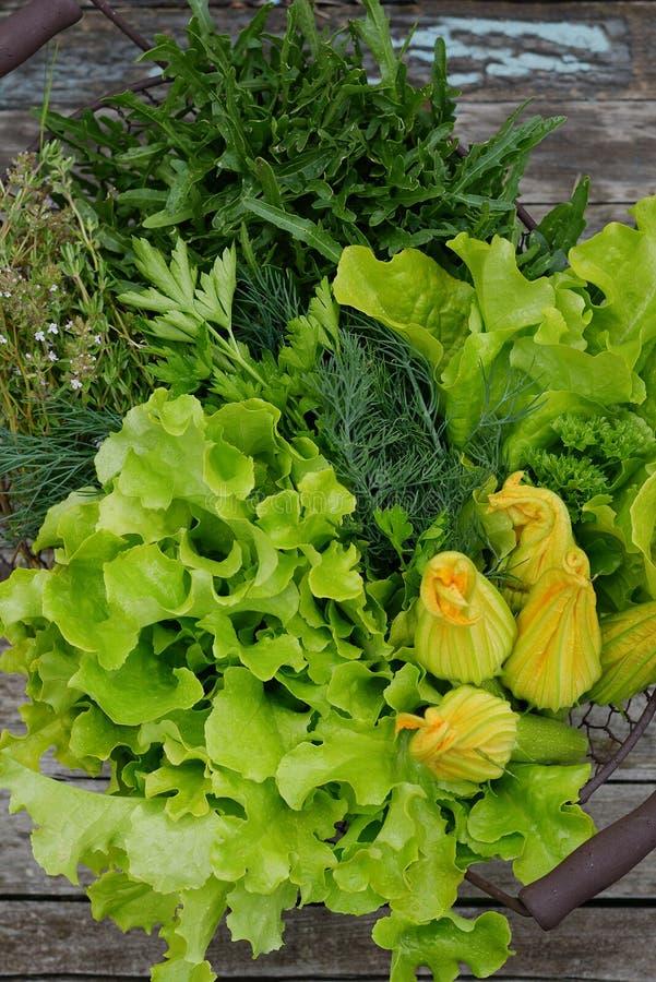 Nya grönsallatsidor som rivas sönder från trädgården Saftig grön sallad Sommar Blommor av zucchinin, arugula och timjan arkivfoton