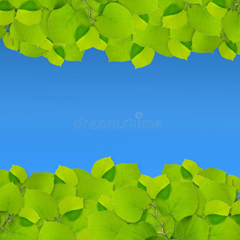 nya greenleaves royaltyfri foto