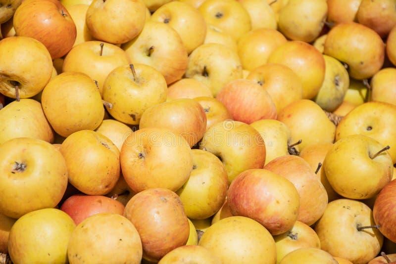 Nya gula äpplen i marknad för öppen luft för bonde en jordbruks-, säsongsbetonad sund mat royaltyfria bilder