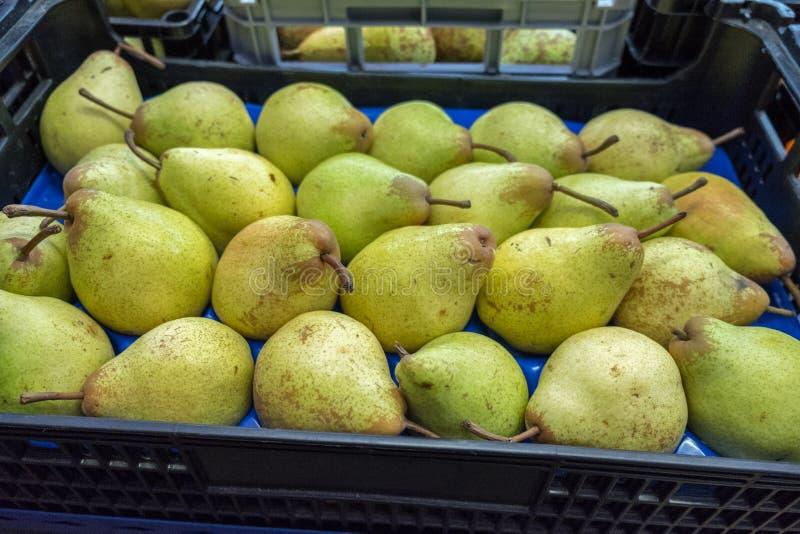 Nya gula päron som är till salu på den Porto marknaden (Mercado gör Bolhao royaltyfri fotografi