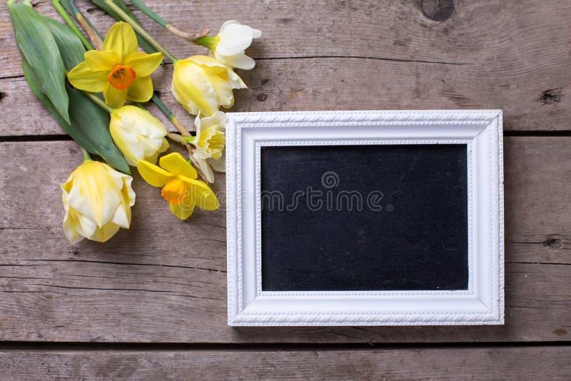 Nya gula påskliljor och tulpanblommor och tom svart tavla royaltyfria foton