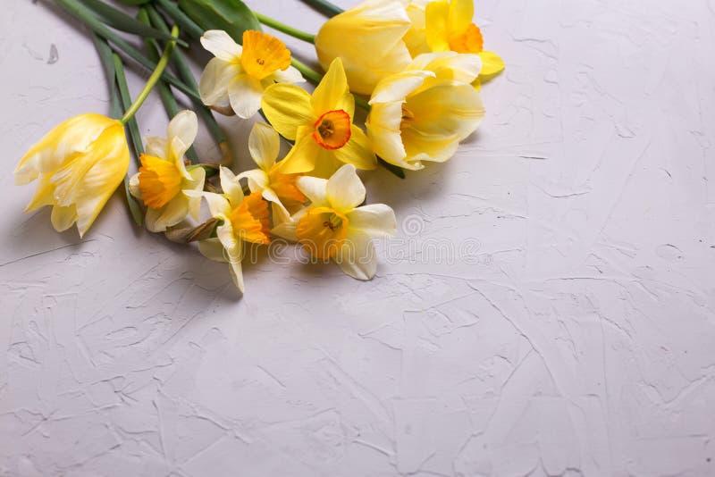 Nya gula pingstlilja- och tulpanblommor på grå färger texturerade bac arkivbild