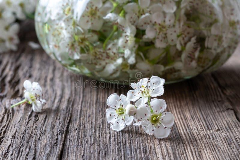 Nya hagtornblommor och tinktur på en tabell fotografering för bildbyråer