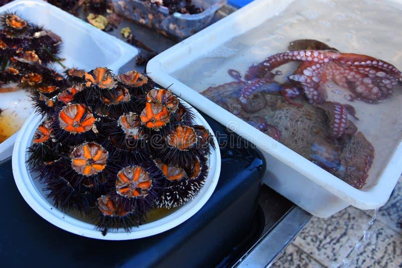 Nya havsgatubarn ricci di sto och bläckfisk arkivfoton