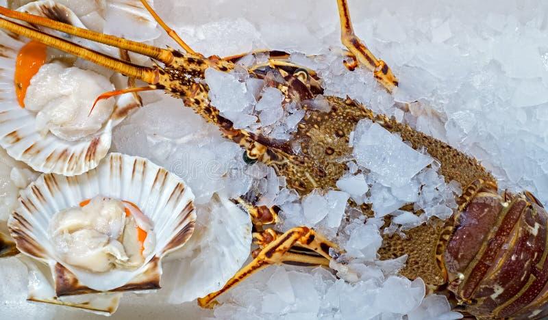 Nya hummer och ostron på is royaltyfria bilder
