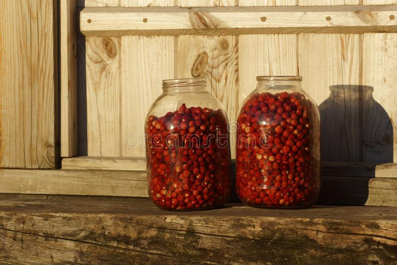 Nya jordgubbar samlas i glass krus royaltyfri foto