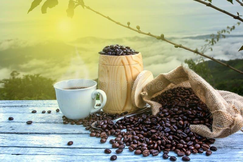 Nya kaffebönor i lantgården arkivfoton