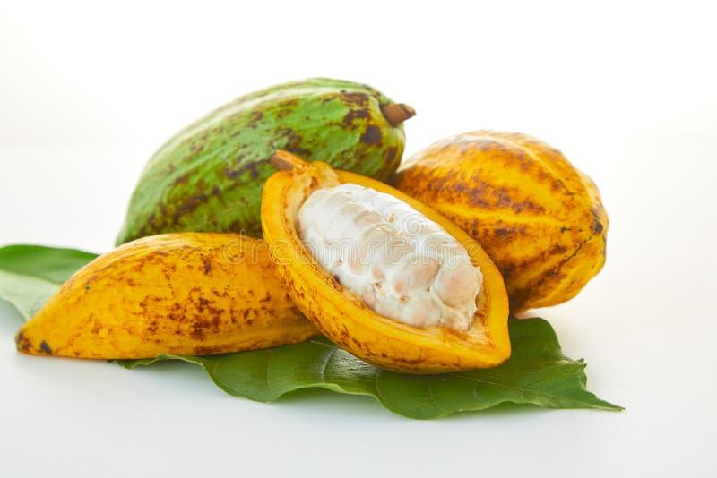 Nya kakaofrukter fotografering för bildbyråer