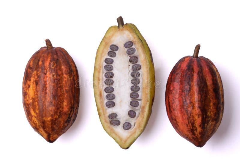 Nya kakaofrukter med bönor arkivfoto