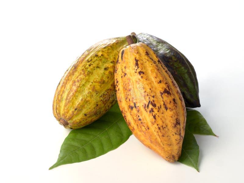 Nya kakaofrukter med det gr?na bladet fotografering för bildbyråer