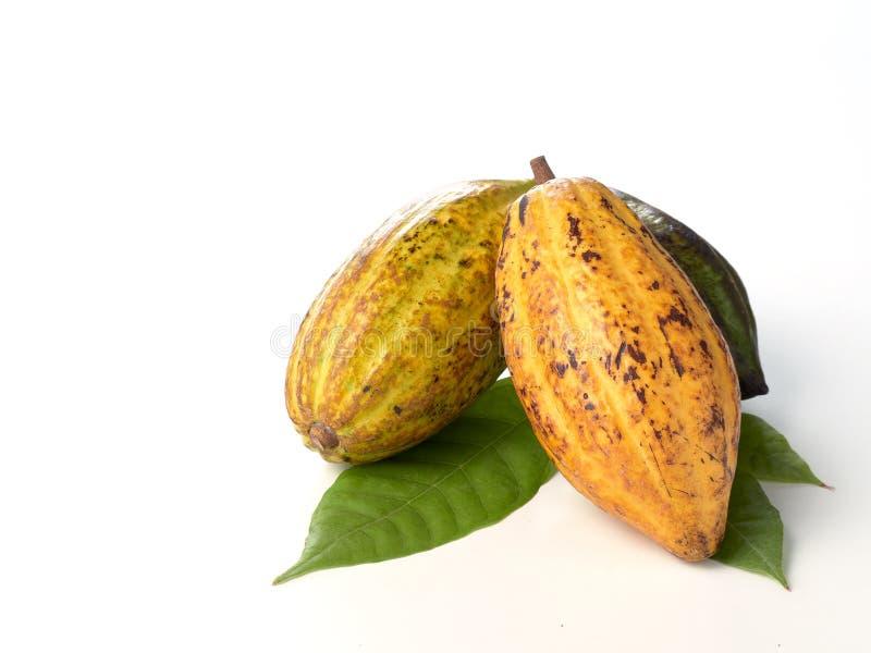 Nya kakaofrukter med det gr?na bladet royaltyfri foto