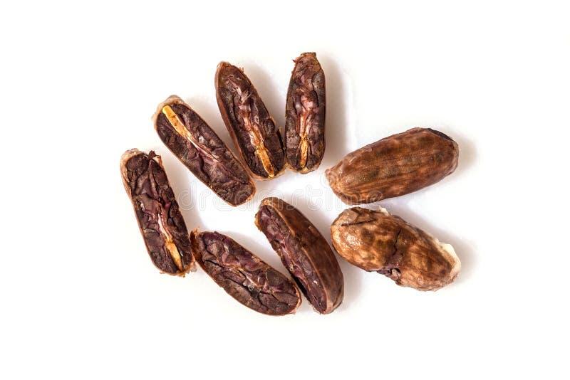 Nya kakaokakaobönor royaltyfri fotografi