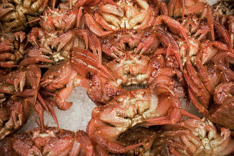 Nya krabbor på den Tsukiji fiskmarknaden i centrala Tokyo, Japan fotografering för bildbyråer