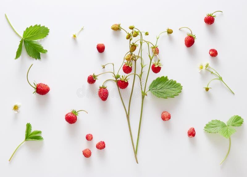 Nya lösa jordgubbar med blommor och sidor arkivfoto