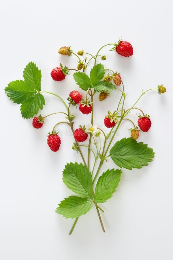 Nya lösa jordgubbar med blommor och sidor royaltyfria foton