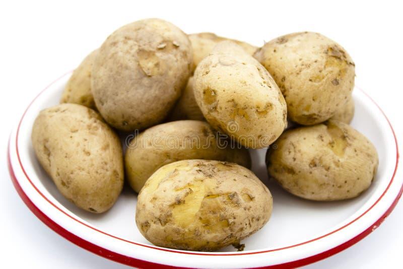 Nya lagade mat bruna potatisar royaltyfri foto