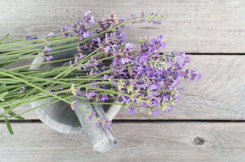 Nya lavendelörter i marmormortel royaltyfri fotografi