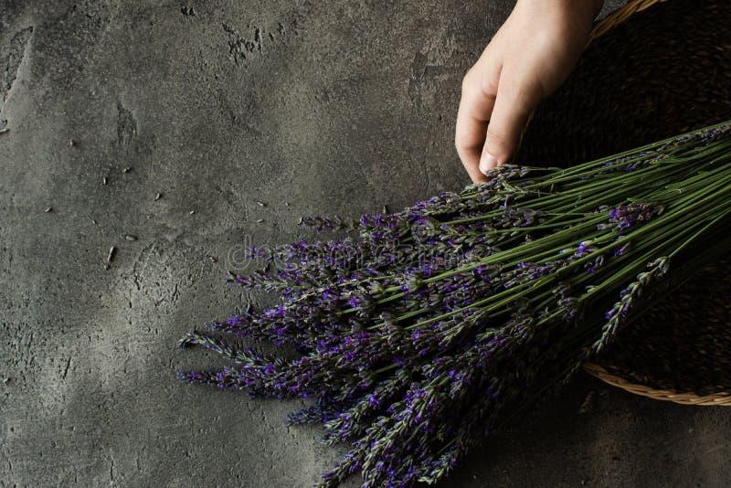Nya lavendelblommor på lantlig mörk bakgrund arkivbild