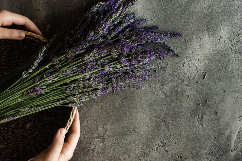 Nya lavendelblommor på lantlig mörk bakgrund royaltyfri bild