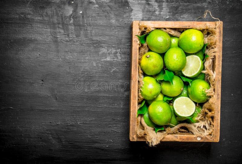 Nya limefrukter i den gamla asken fotografering för bildbyråer