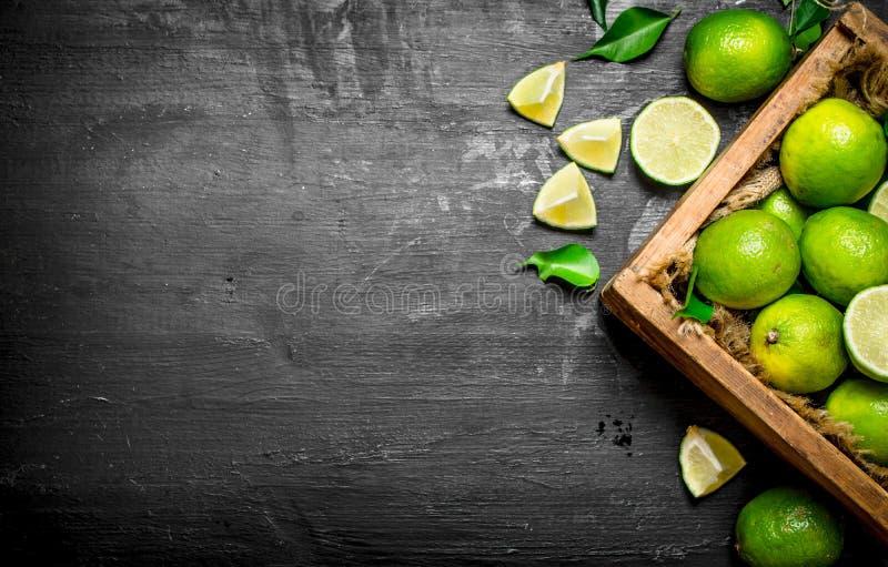 Nya limefrukter i den gamla asken royaltyfria bilder
