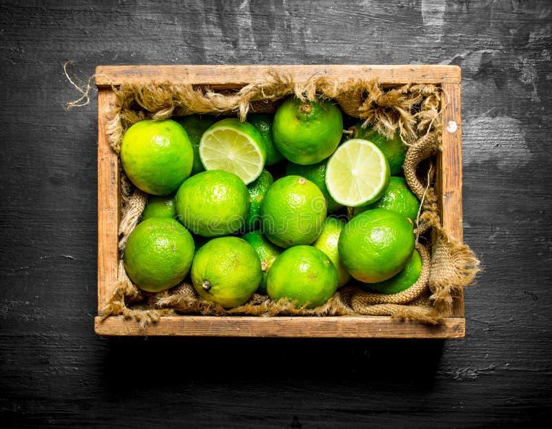 Nya limefrukter i den gamla asken royaltyfri fotografi