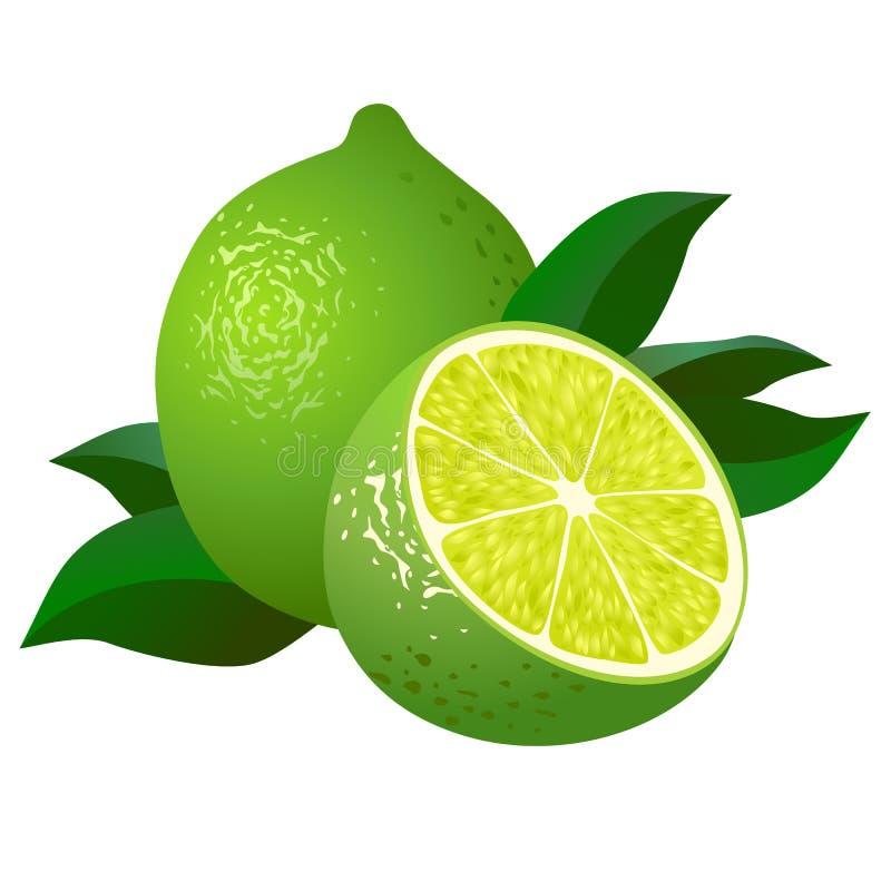Nya limefrukter med lämnar stock illustrationer
