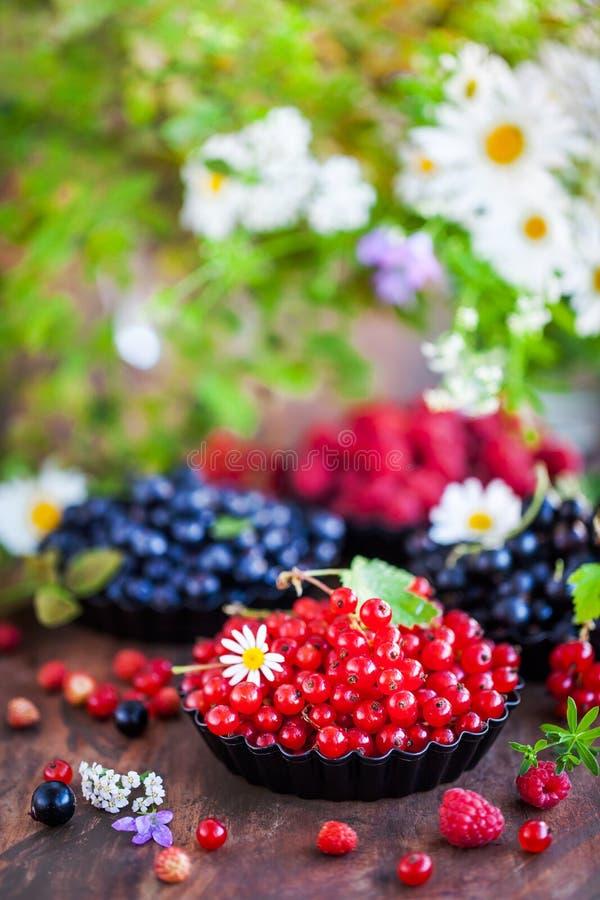 Nya mogna sommarbär - röd vinbär i förgrunden och svart vinbär, blåbär, hallon royaltyfri bild