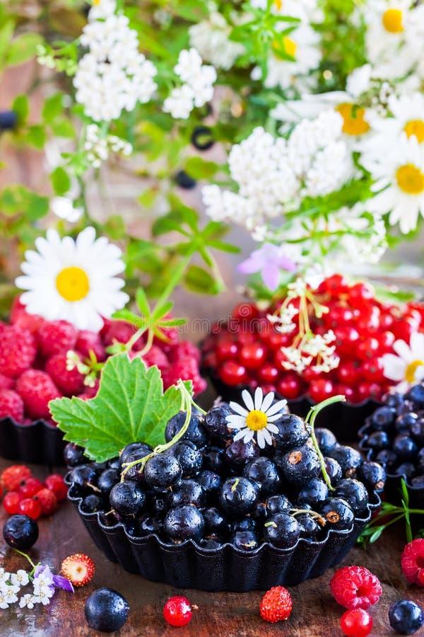 Nya mogna sommarbär - svart vinbär i förgrunden och fotografering för bildbyråer