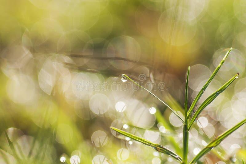 Nya morgondaggdroppar på gräset bild royaltyfria foton