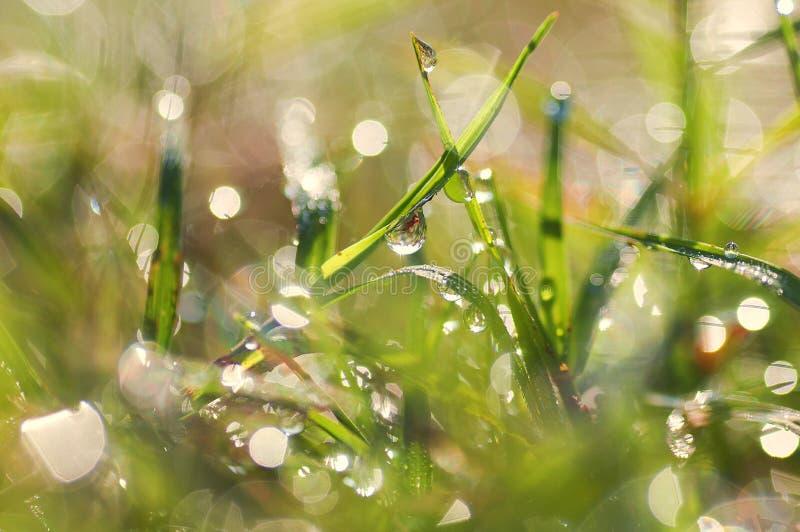 Nya morgondaggdroppar på gräset bild royaltyfria bilder