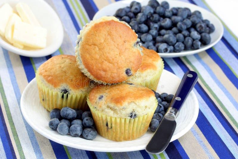nya muffiner för blåbärblåbär arkivbild