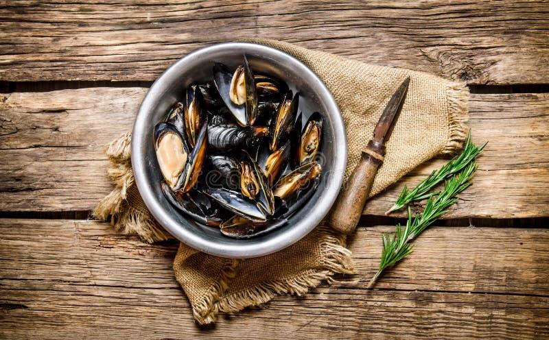 Nya musslor i en kopp, en kniv och rosmarin royaltyfri bild