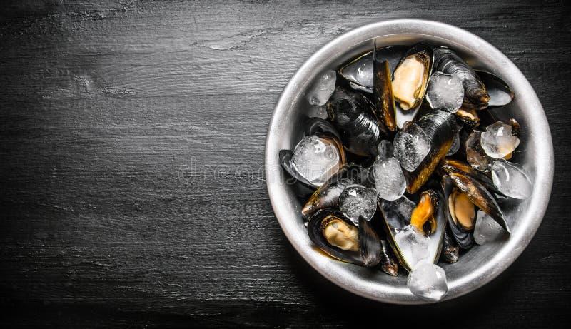 Nya musslor i en kopp med is arkivbild