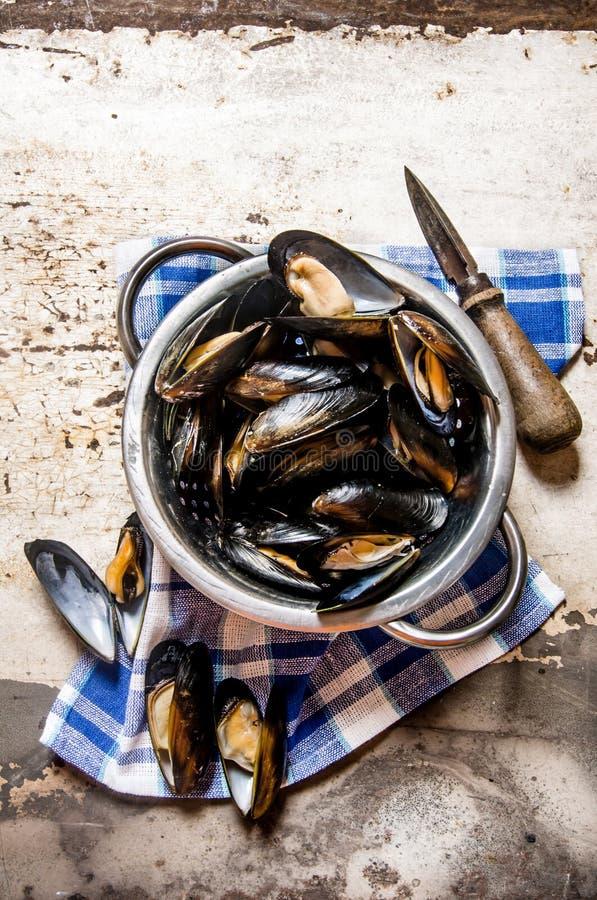 Nya musslor i en kruka med en kniv på tyget arkivbilder