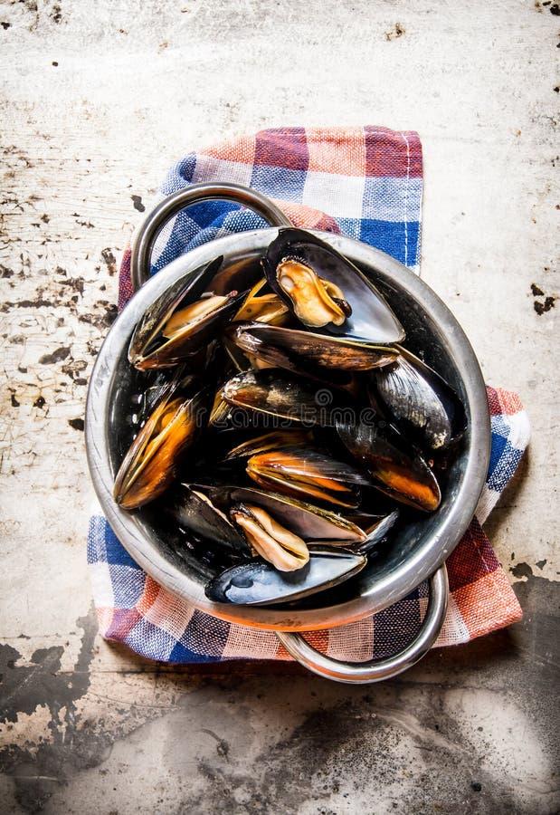 Nya musslor i en panna med en kniv royaltyfria foton