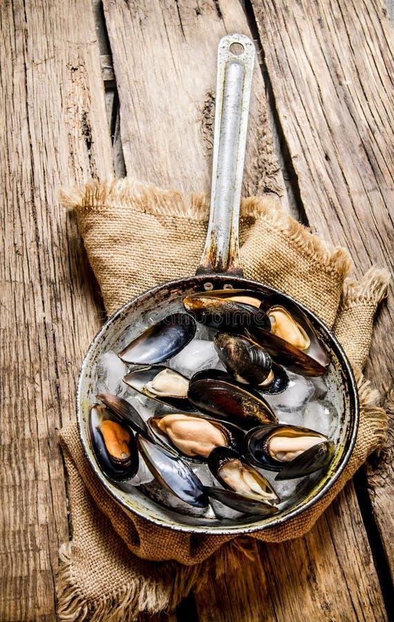 Nya musslor i en panna på det gamla tyget fotografering för bildbyråer
