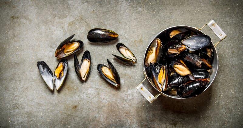Nya musslor i pannan På stentabellen royaltyfri foto