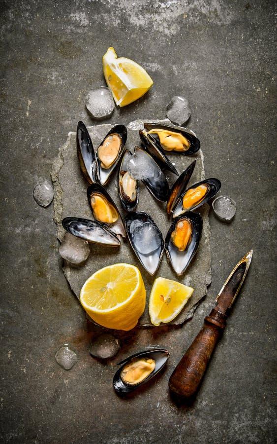 Nya musslor med citronen och is på en sten står royaltyfria bilder