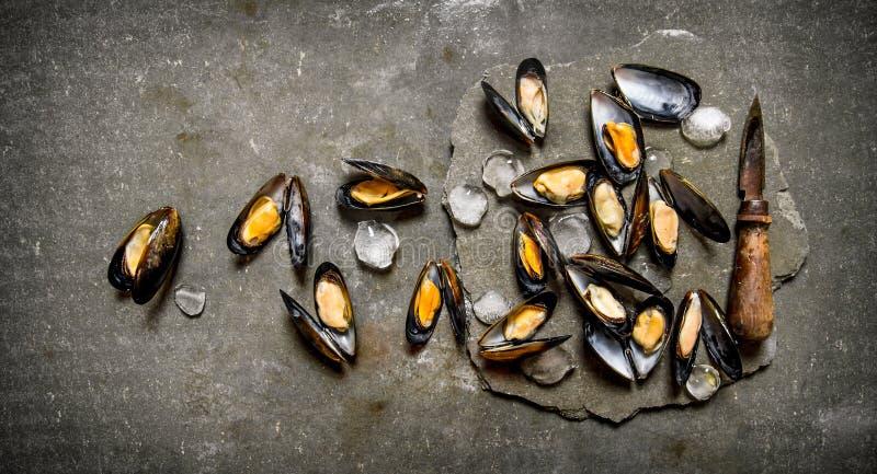 Nya musslor med en kniv på en sten står arkivfoton