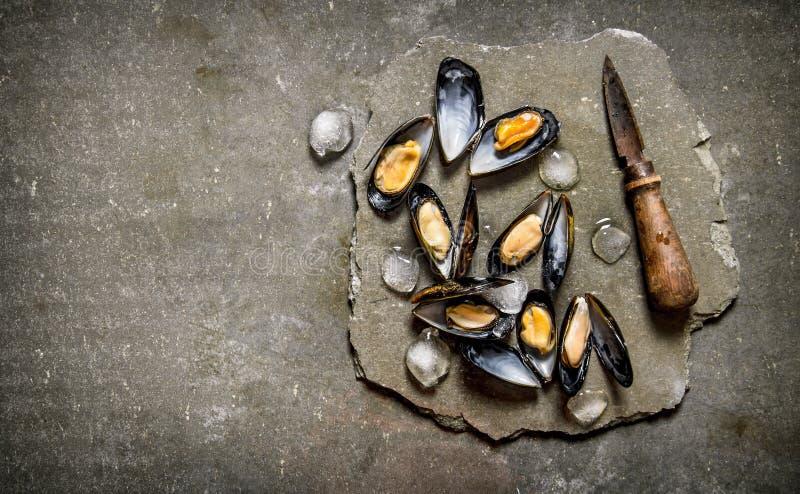 Nya musslor med en kniv på en sten står royaltyfri fotografi