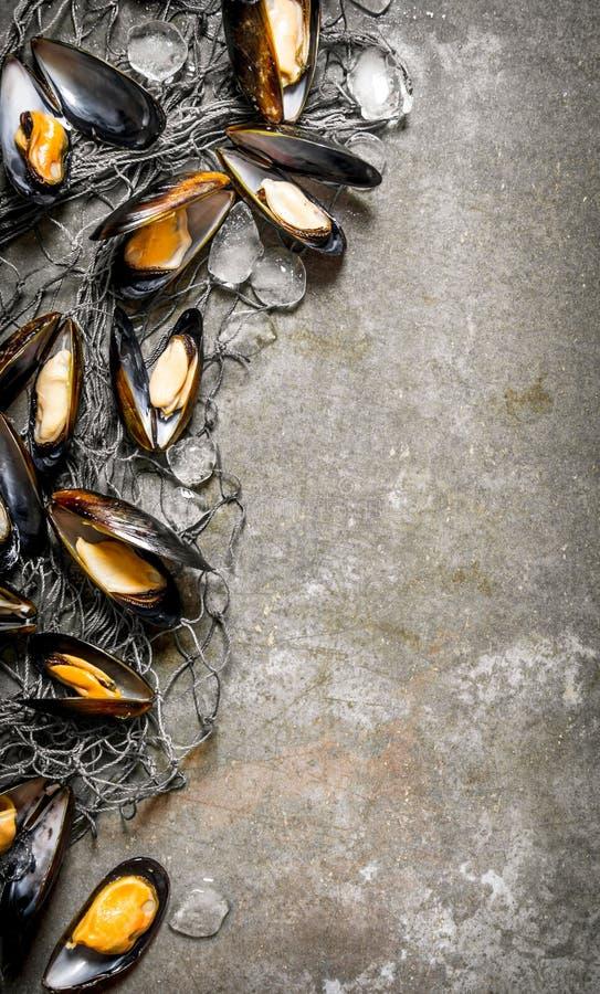 Nya musslor med fisknät och is arkivfoton