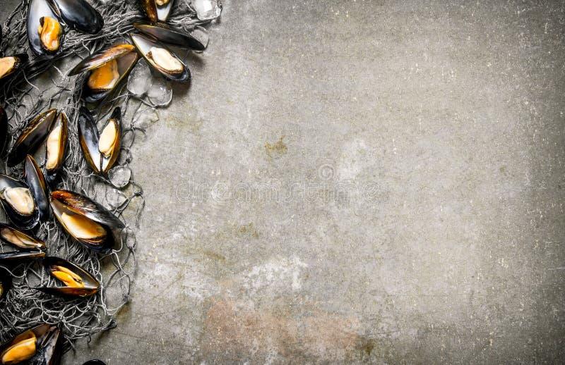 Nya musslor med fisknät och is På stentabellen royaltyfri fotografi