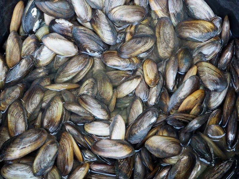 Nya musslor på den lokala marknaden royaltyfri bild