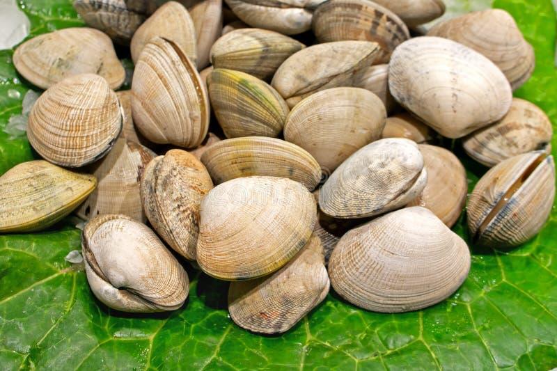 Nya musslor på grön tjänstledigheter och is som säljs på fishmarket i Barcelona royaltyfria foton