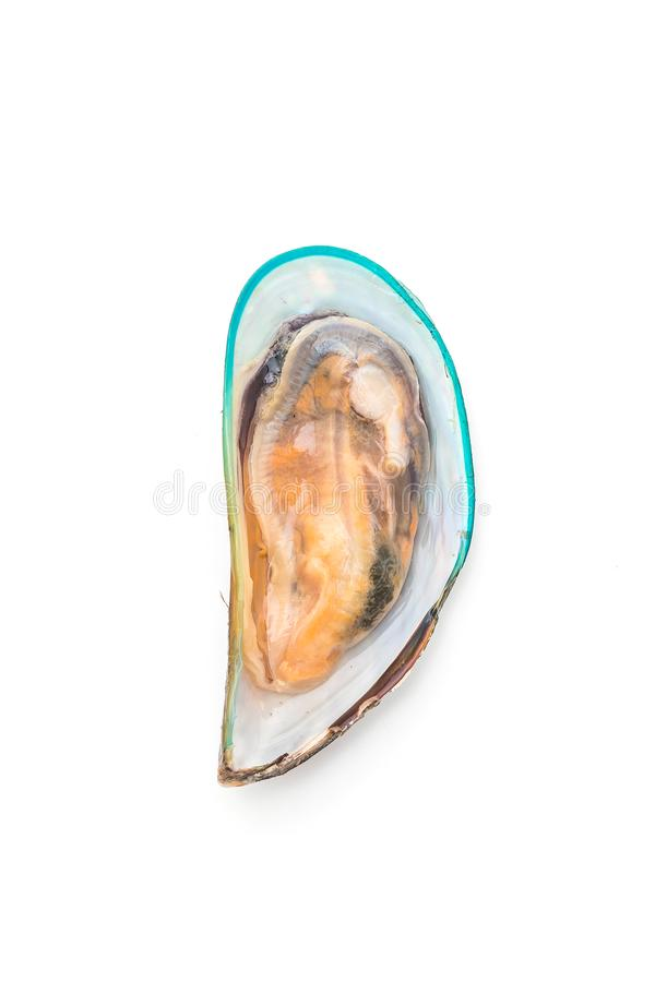 Nya musslor på vit bakgrund arkivbild