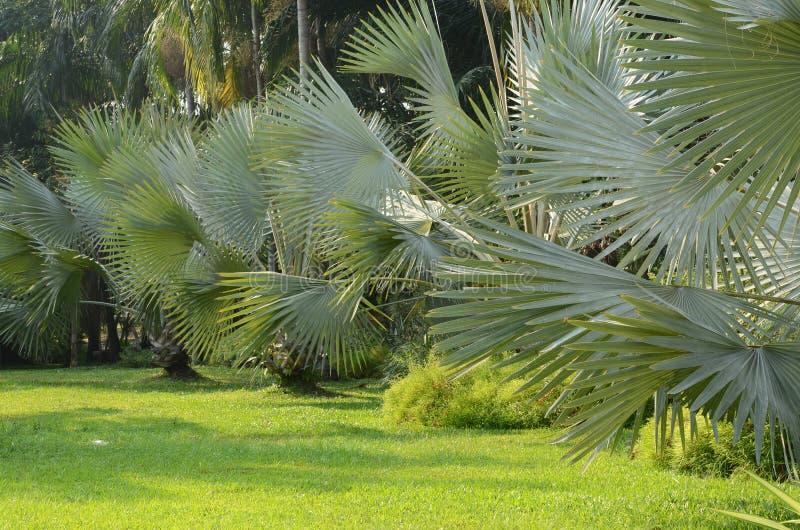 Nya naturliga parkerar med dekorerade palmträd arkivfoton